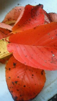 秋です(*^_^*)